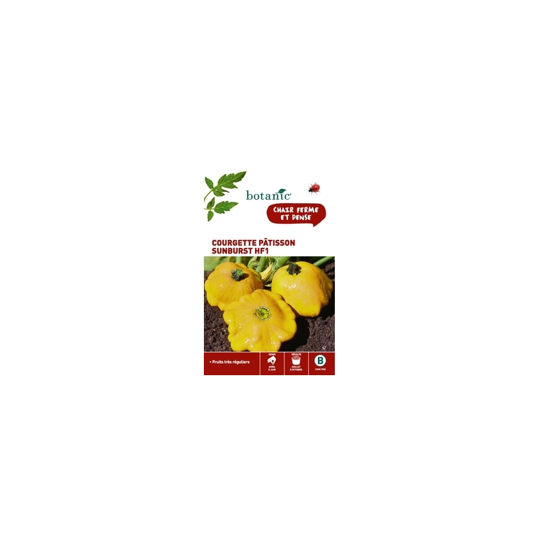 Courgette patisson sunburst hybride f1 x2 sachets