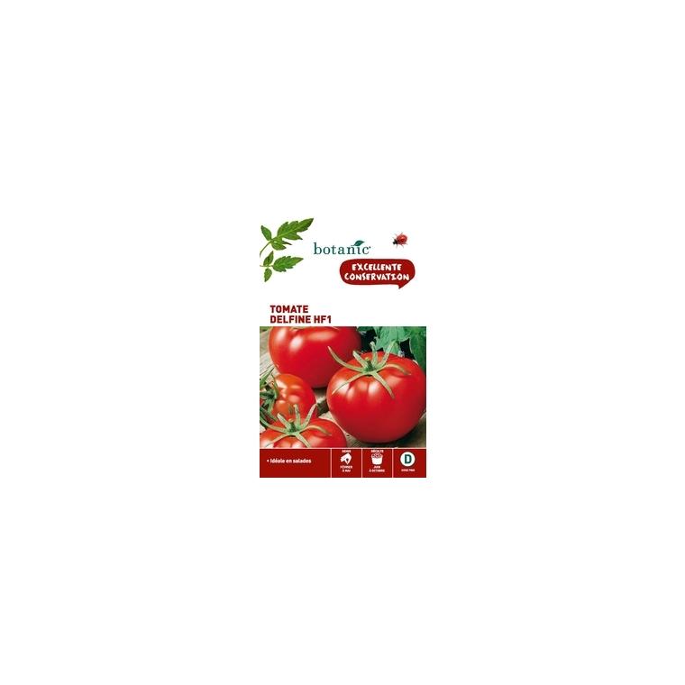 Tomate Delfine HF1