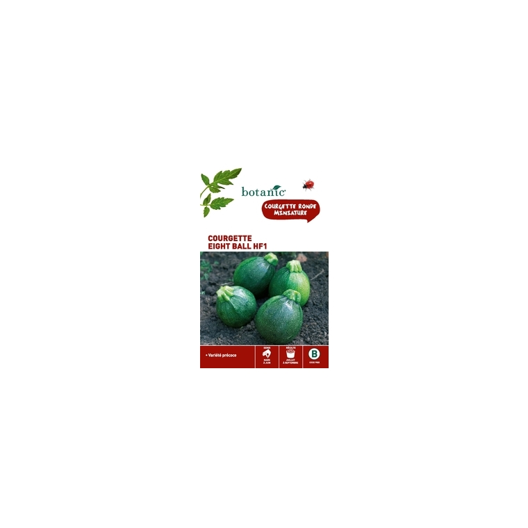 Courgette eight ball hybride f1 Insolite x2 sachets