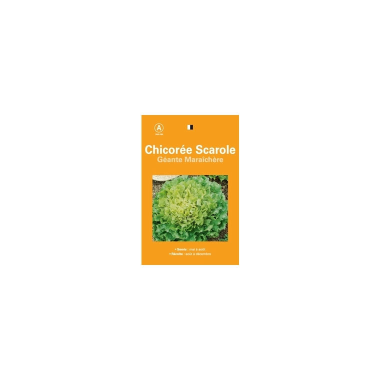 Chicoree scarole geante maraichere
