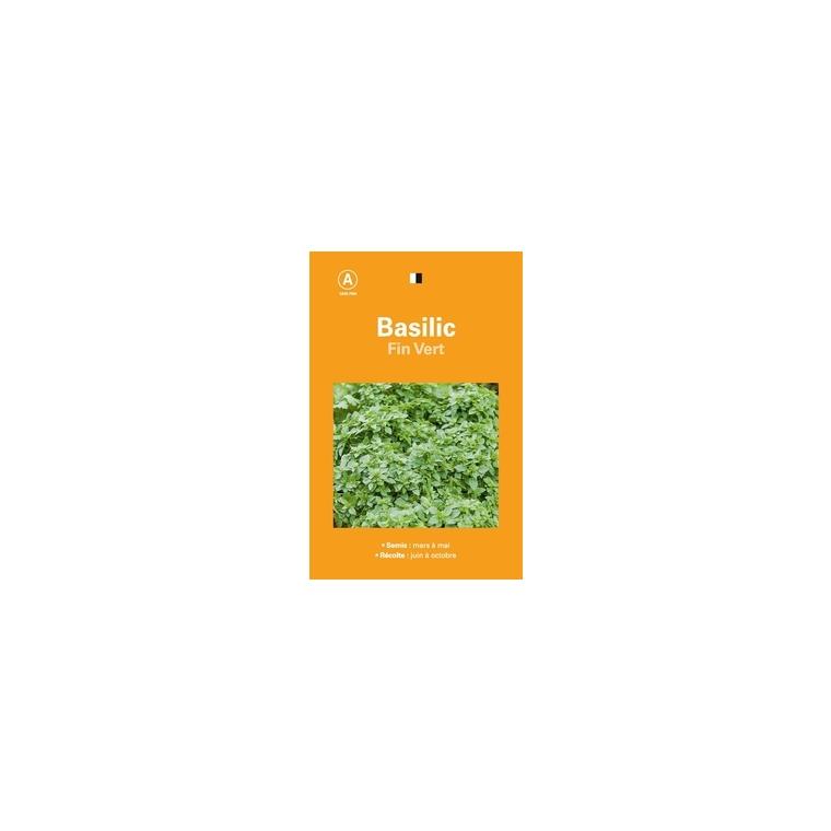 Basilic fin vert