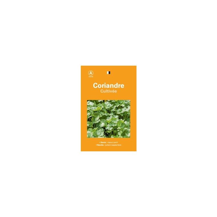 Coriandre cultivee