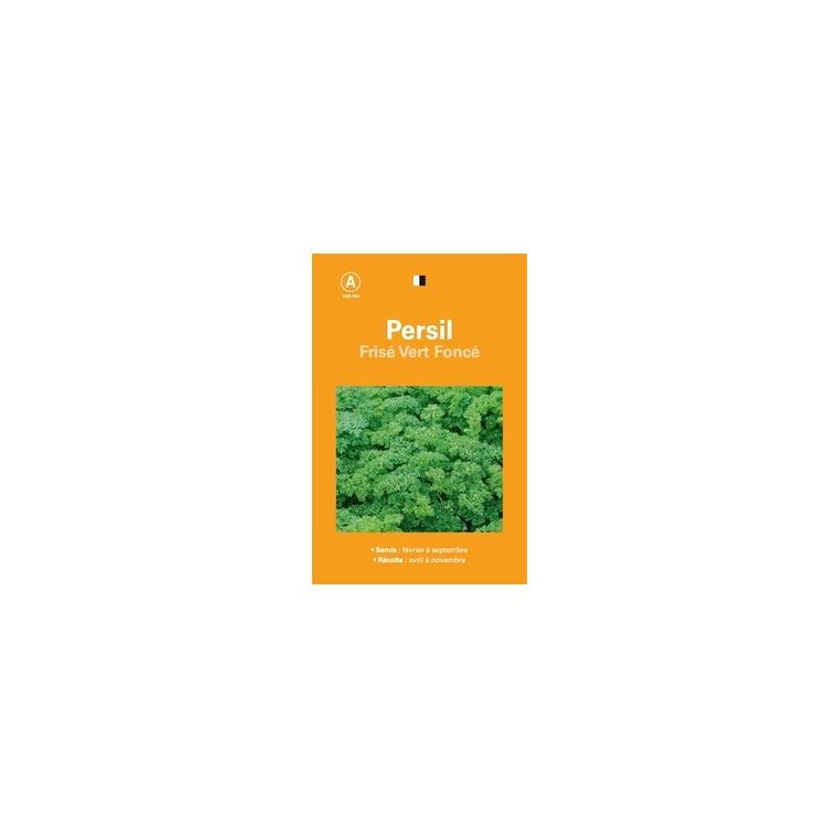 Persil frise vert fonce