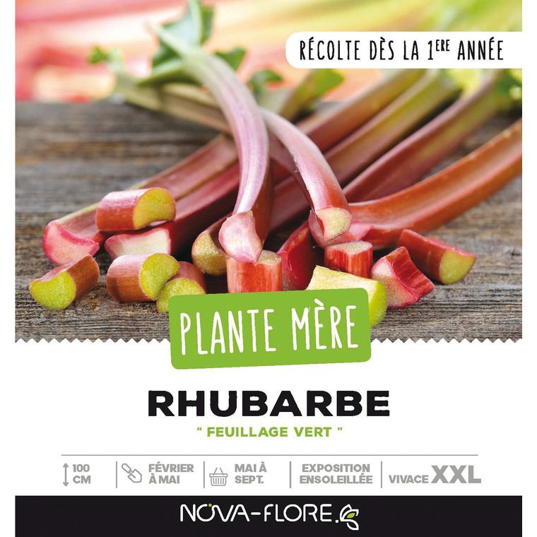 Rhubarbe en vrac dans caisse en bois