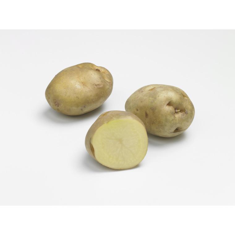 10 plants de pommes de terre sirtema calibre 28 à 35
