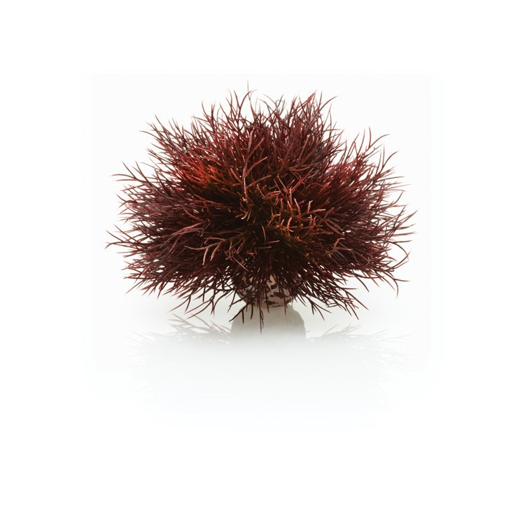 Décoration aquarium Crimson Sea Lily biOrb