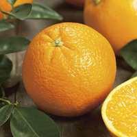 Orange Naveline - Prix au kg