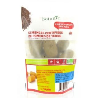 Pommes de terre Charlotte bio calibre 0001, 10 plants