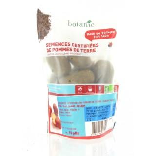 Pommes de terre Rosabelle bio calibre 0001, 10 plants