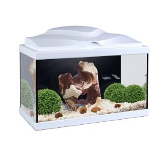 Aquarium Aqua 20 Led Blanc 17l
