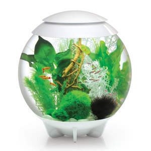 Aquarium BiOrb Halo blanc 60L
