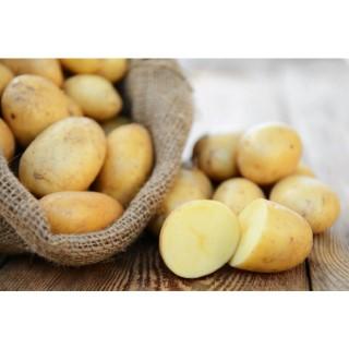 Pommes de terre bio Ditta – Prix au kilo 242572