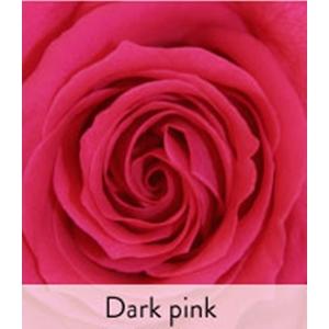 Rose stabilisée standard fuchsia Ø 4 x H 50 cm 257566