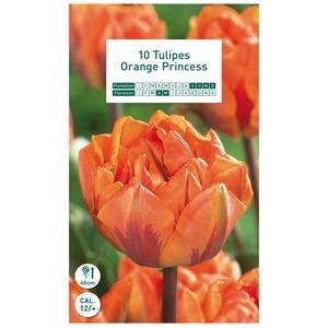 10 bulbes de tulipe Double Hative