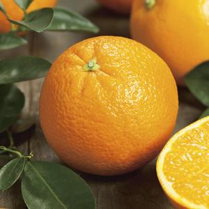 Oranger Navel bio Le pot de 3 litres