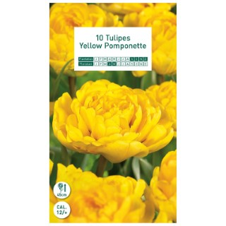 10 bulbes de tulipe double tardive jaune (Yellow Pomponette)