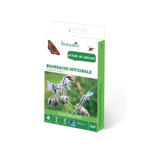 Bourrache officinale 260162