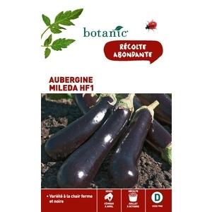 Aubergine Mileda HF1 x2 sachets 261122