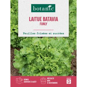 Laitue batavia funly Caillard 261181