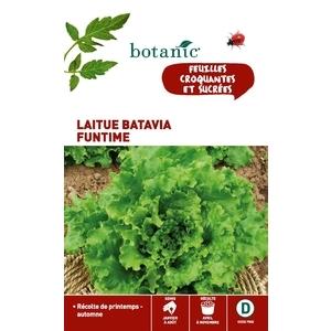 Laitue batavia funtime Caillard 261183