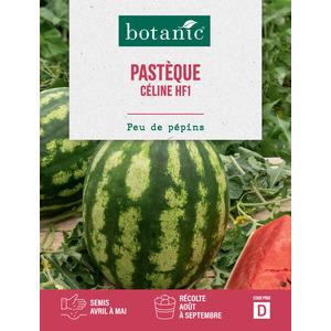 Melon d'Eau Pauline HF1 pastèque x2 sachets