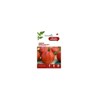 Tomate Borsalina HF1 type Cœur de Bœuf 261262