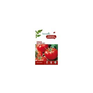 Tomate Delfine HF1 261264