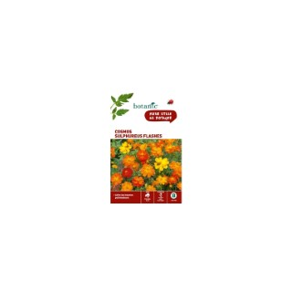 Cosmos sulphureus flashes orange en sachet 261325