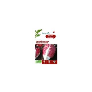 Chicorée Sauvage Rouge de Vérone AB BIO 261373