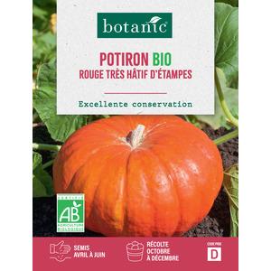 Potiron Rouge Vif d'Étampes AB BIO 261425