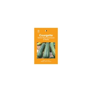 Courgette verte non coureuse d'Italie 261520