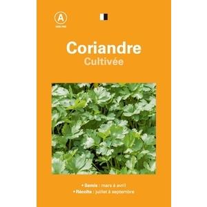 Coriandre cultivee 261547