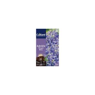 Aubrieta royale bleue en sachet 263059