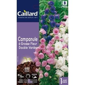 Campanule à grosse fleur double variée en sachet 263066