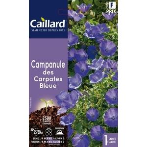 Campanule des Carpates bleue en sachet 263067