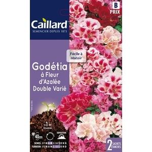 Godétia à fleur d'Azalée double variée en sachet 263108
