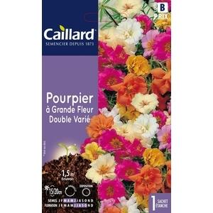 Pourpier à grande fleur double varié en sachet 263169