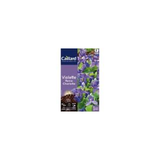 Violette Reine Charlotte en sachet 263206