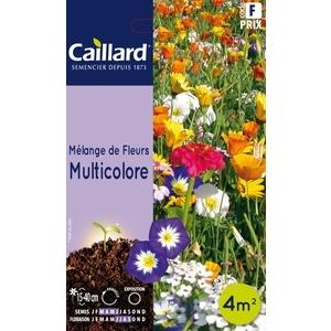 Mélange de fleurs multicolore en sachet 263216