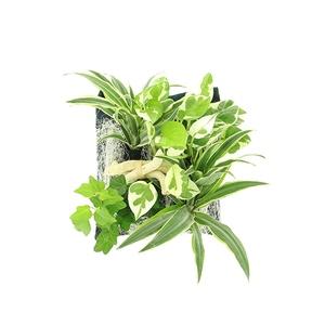 Poche plantée variée pour cadre végétal 4 plantes 264267