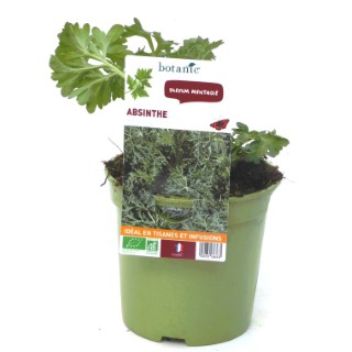 Absinthe. Le pot de 1 litre recyclé