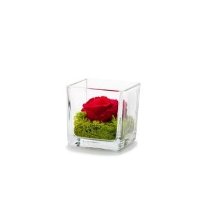 Composition rose rouge 292501