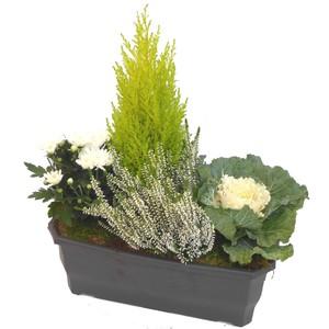 Jardinière d'automne blanche. La jardinière de 40 cm