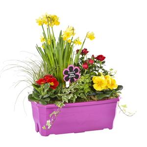 Jardinière fête des Grands Mères. La jardinière de 40 cm