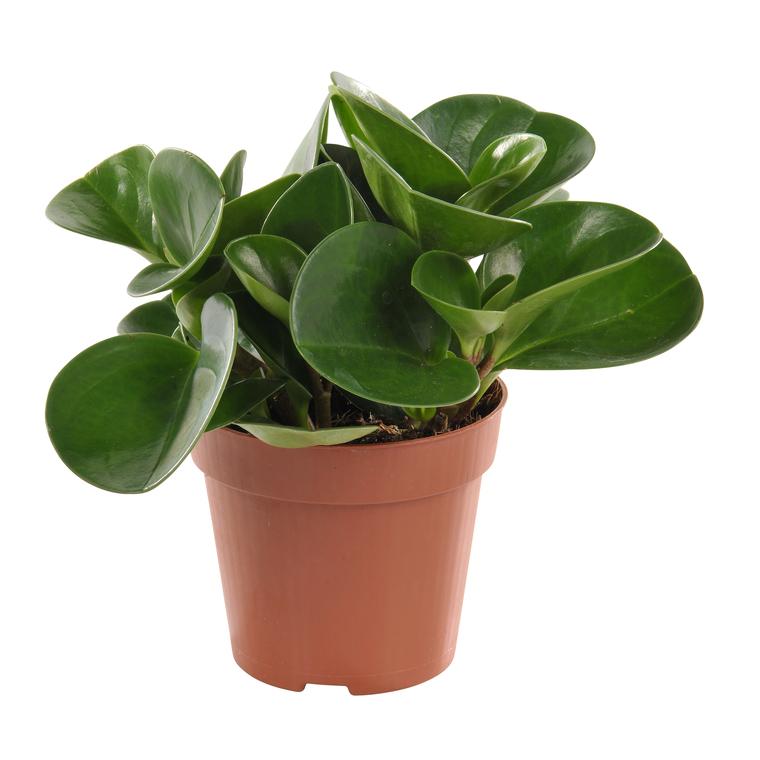 Plantes vertes plantes et fleurs d 39 int rieur et maison for Porte plantes dinterieur