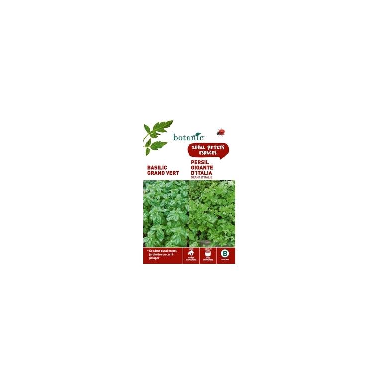 Basilic grand vert + persil gigante d'italia Duo aromatique