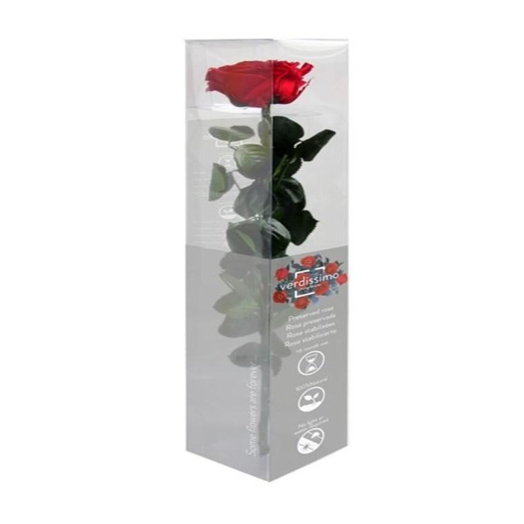 Rose stabilisée premium rouge en étui Ø 6 x H 50 cm 221338