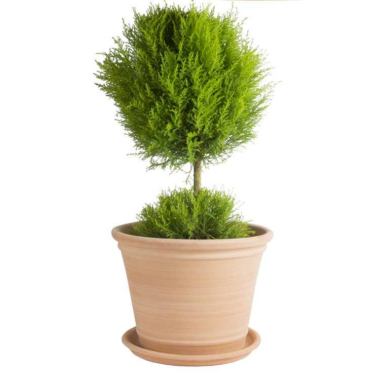 Pot Cocio Terraza en terre cuite claire D53x H40 228014