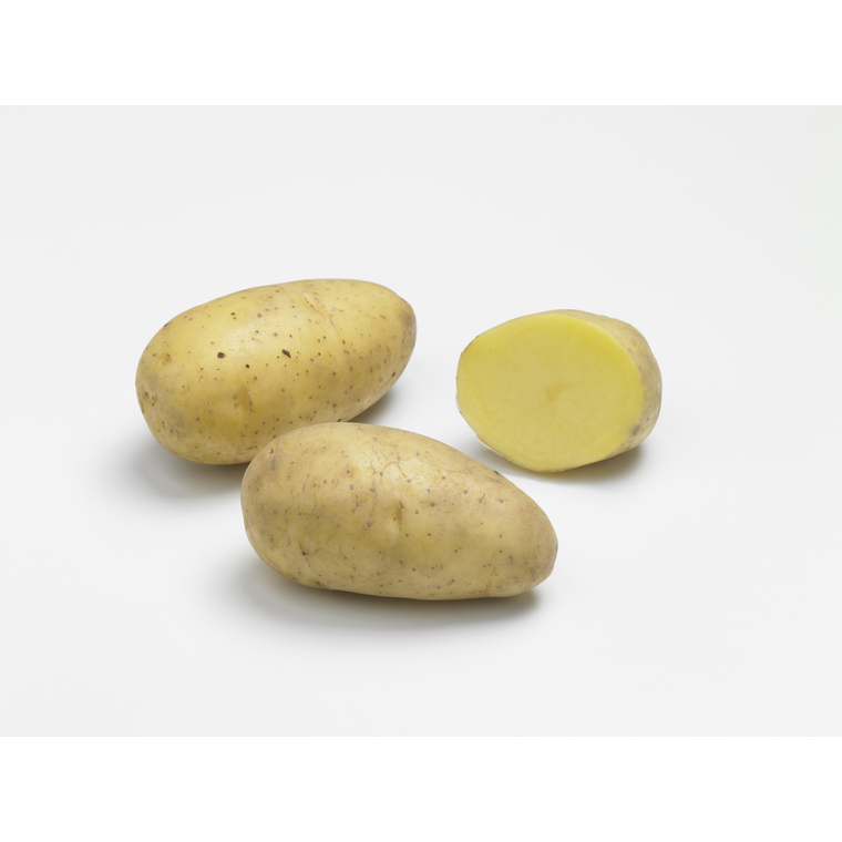 Pommes de terre Annabelle bio calibre 0001, 25 plants 228946