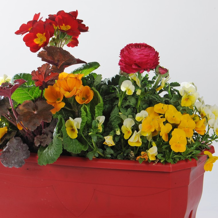 Jardinière variée. La jardinette de 25 cm 256031